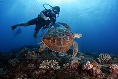 2012 11 METTRA OCEAN INDIEN 3737