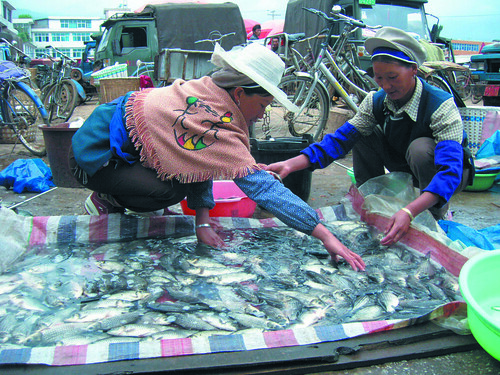 Chinese fishmongers in China. Photo taken by Hong Meen Chee, 2009.
