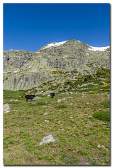 _JRR2728 (JR Regaldie Photo) Tags: mountain snow rocks nieve lagunas sierrademadrid pealara jrregaldiephoto