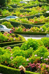 Lombard Street, San Francisco (5ERG10) Tags: sanfrancisco california road trip flowers summer usa holiday cars sergio northerncalifornia america head perspective landmark lookingup norcal westcoast turns passerby zigzag hairpin compressed lombardstreet flowerbeds 2011 amiti 5erg10