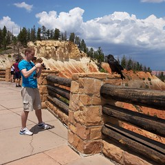 Anytime now... (repete7) Tags: usa canon utah nationalpark photographer wildlife tourist brycecanyon overlook raven chimping brycecanyonnationalpark corvuscorax commonraven northernraven ponderosapoint canont1i canon1585