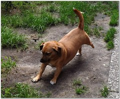 """""""Morning....."""" (MaxUndFriedel) Tags: morning dog home dogs nature animal animals garden gymnastics tired hunde"""