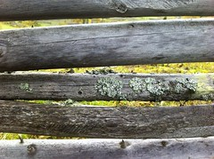 IMG_1775 (Blue Sphinx) Tags: wood fence sweden lichen sverige lav staket tr grdesgrd