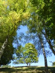 Automne (blogspfastatt (+3.000.000 views)) Tags: autumn automne season landscape paysage landschaft schwarzwald saison pfastatt blogspfastatt