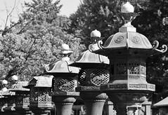 Tsh-g Shrine Lanterns (Warriorwriter) Tags: street city people japan temple photography japanese tokyo shrine ueno candid religion belief harajuku metropolis ward asakusa prefecture shinto buddism metropolitan meijijingu crowded taito animism megacity sensji shinbutsushg