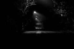 Streetlights (DMD67) Tags: street longexposure trees shadow blackandwhite bw tree monochrome fog night nikon streetlight foggy 85mm d5000 785mm