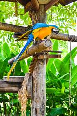 Arara (Marcos-Rodrigues) Tags: nature brasil cores nikon flickr pa fotos par garas norte arara belm belmparbrasil mangaldasgaras belmdopar mtur ministriodoturismo brasilemimagens