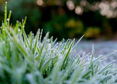 Frosty Morning (Kaibakorg) Tags: ice grass frozen nikon frost frosty dew f28 dx d300 1755mm