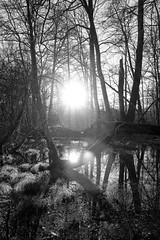 En sous bois (raphaljung) Tags: b light sun white black monochrome forest noir sony w 100 blanc fort rx