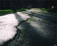 solitude.... (scott morgan images) Tags: park uk trees england london unitedkingdom parkbench bitumen pathway greaterlondon latestuploadflickr oakleysquaregardens