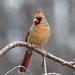 Ms Cardinal