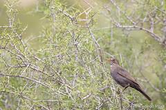 14-02-11 - Pajaros Montgo IV 049 (fran gallego) Tags: parque natural pajaros mongo frangallego franciscogallegomora frangallegomora