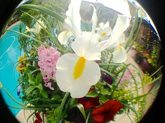 Poolside Winter Flowers Go Fisheye (chicbee04) Tags: photostream