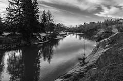 Stanley Park Reflections (Scott Martin Calgary) Tags: trees canada calgary reflections river blackwhite alberta stanleypark elbowriver