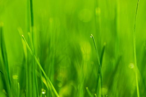 Grün - Tautropfen