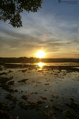 Sunset over paddy field(portrait)