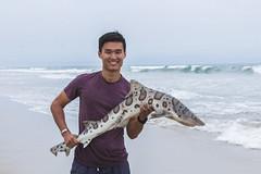 Fishing for Leopard Shark (Charlie Lee.) Tags: california usa beach america canon shark fishing unitedstatesofamerica socal southerncalifornia orangecounty westcoast huntingtonbeach leopardshark sharkweek   600d  huntingtonstatebeach   eos600d rebelt3i