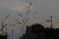 Grass Lights Sky! ('cosmicgirl1960' NEW CANON CAMERA) Tags: blue green grass yellow lights devon wires posts telegraph teignmouth yabbadabbadoo