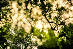 Up In The Trees (Florian Btow) Tags: trees light sun green beautiful yellow backlight forest golden exposure glow bokeh double 24mm