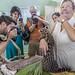 Ocelot Gamboa Wildlife Rescue pandemonio 2017 - 09