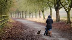 Gloomy Family Walk (James W Atkins) Tags: darenth darenthcountrypark country park countrypark family dog cavalierkingcharlesspaniel trike winter gloomy