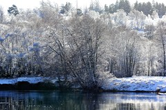 Reflecting on the river Spey. (artanglerPD) Tags: reflecting river spey silver birch snow frost winter sunlight