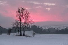 One of these beautiful winter sunsets ... (acbrennecke) Tags: achimbrennecke landscape winter sunset red pink trees backlight art snow clouds nikon nikon5500 greaterphotographers greatestphotographers ultimatephotographers