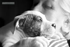 Édesanyám és Lina (Pauer Art Photography) Tags: mydog puppy loyalfriend love pauerartphotography nikond7100 sigmaart1770mm