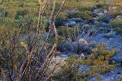 2016_10_25_4692-PS (DA Edwards) Tags: oliver lee state park new mexico desert plants ocotillo cliffs fourwheelcamper da edwards photography fall 2016