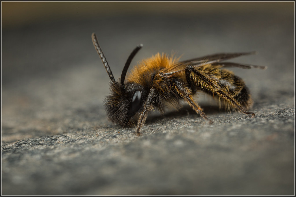 Birmingham bees essay