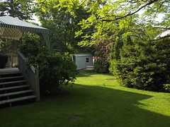 Backyard (cjh44) Tags: trees ontario home grass sunshine backyard kingston