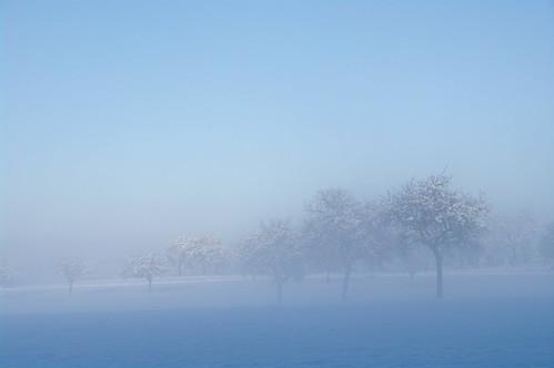 Arbres, brume et neige