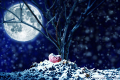Winter Love (carrieduay) Tags: blue autumn winter red sky moon snow cold tree love leaves night stars alone sad seasons nocturnal heart bokeh branches homeless roots fullmoon moonlit relationship moonlight lonely snowing icy snowfall isolated