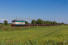 1019 - 655_501 + PIANALI CON TONDINI FERRO (treno VERONA - MASSA ) 14-5-2013 FULL HD (SPECIALE CAIMANI XMPR) (Frank Andiver TRAIN IN TUSCANY) Tags: italy train canon frank photo italia photos rail trains tuscany rails locomotive toscana treno fs trenitalia treni 655 ferrovie binario caimano fullhd e655 andiver frankandiver trainintuscany