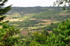 SAMPLES Programme (World Agroforesty Centre) Tags: food farmers kenya security climatechange mitigation livelihoods agroforestry smallholder