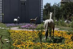 Horses, Kazakhstan (bbcworldservice) Tags: prison bbc kazakhstan almaty astana gulag rayhan demeytrie karraganda