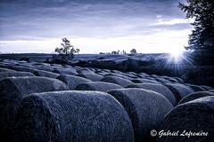 Ballots... (Gabriel Lafrenire) Tags: nature champs paysage brume matin leverdesoleil lgume balledefoin