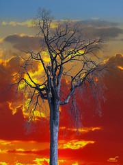 Nu / Naked (sevyl (de plus en plus avec YouPic...de moins en m) Tags: sunset red orange canada tree yellow clouds automne rouge solitude automn qubec gatineau nuages arbre chaud couchdesoleil mygearandme mygearandmepremium mygearandmebronze vision:night=053