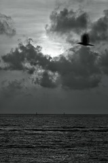 time to go home (Abhijit Chendvankar) Tags: light sunset sea sun india bird clouds photography photo nikon flickr waves maharashtra crow mumbai tamron worli seaface timetogohome worliseaface tamron90mmf28macro nikond5000 snapseed
