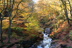 River Spodden (rvanr) Tags: autumn fern colour tree water leaves rock river waterfall leaf moss branch trunk