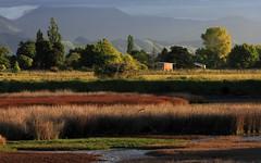Browns and Greens (Tones Corner) Tags: sunset beautiful nelson estuary nzscene nzbeauty nzscenic