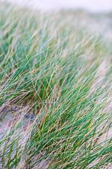 Beach Grass.jpg (nimble.lynx) Tags: white green beach grass relax scotland beige unitedkingdom tele rest tranquil blades zensolitude