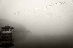 DMZ Bird Sanctuary - Cheorwon, South Korea (Scott Rotzoll) Tags: bird fog asia crane wildlife korea preserve sanctuary dmz redcrested migrate demilitarizedzone cheorwon
