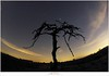 De sterrenhemel (5D316650) (nandOOnline) Tags: nederland natuur boom orion jupiter taurus perseus timburton heide landschap strabrechtseheide wolk ster stronk stier planeet galgenberg sterrenbeeld heeze nbrabant