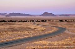 Along the ruote (Liv ) Tags: africa desert namibia namib 2013 laivphoto