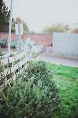 DAY 25 (J0sh Campbell) Tags: christmas tree pine photoshop canon 50mm photoaday fir 5d 365 photooftheday treeday project365 niftyfifty canonef50mmf12l vsco 5dmkiii 5dmk3 vscofilm canoneos5dmkiii