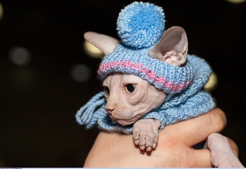 Котёнок-сфинксёнок ©  Nickolas Titkov
