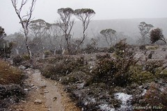 Tasmania in summer. Overland track (Tatters ) Tags: snow cold wind hiking path tasmania snowing wilderness day3 overland theoverlandtrack