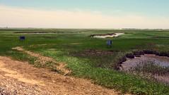 At the Moors 2 (mahler9) Tags: provincetown capecod moors jaym tidalmarsh mahler9 andantecomodofotos