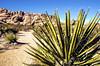 HCS – Bringin' the Heat edition (Wes Iversen) Tags: california cactus nature cacti rocks deserts joshuatreenationalpark hcs nikkor18300mm clichésaturday